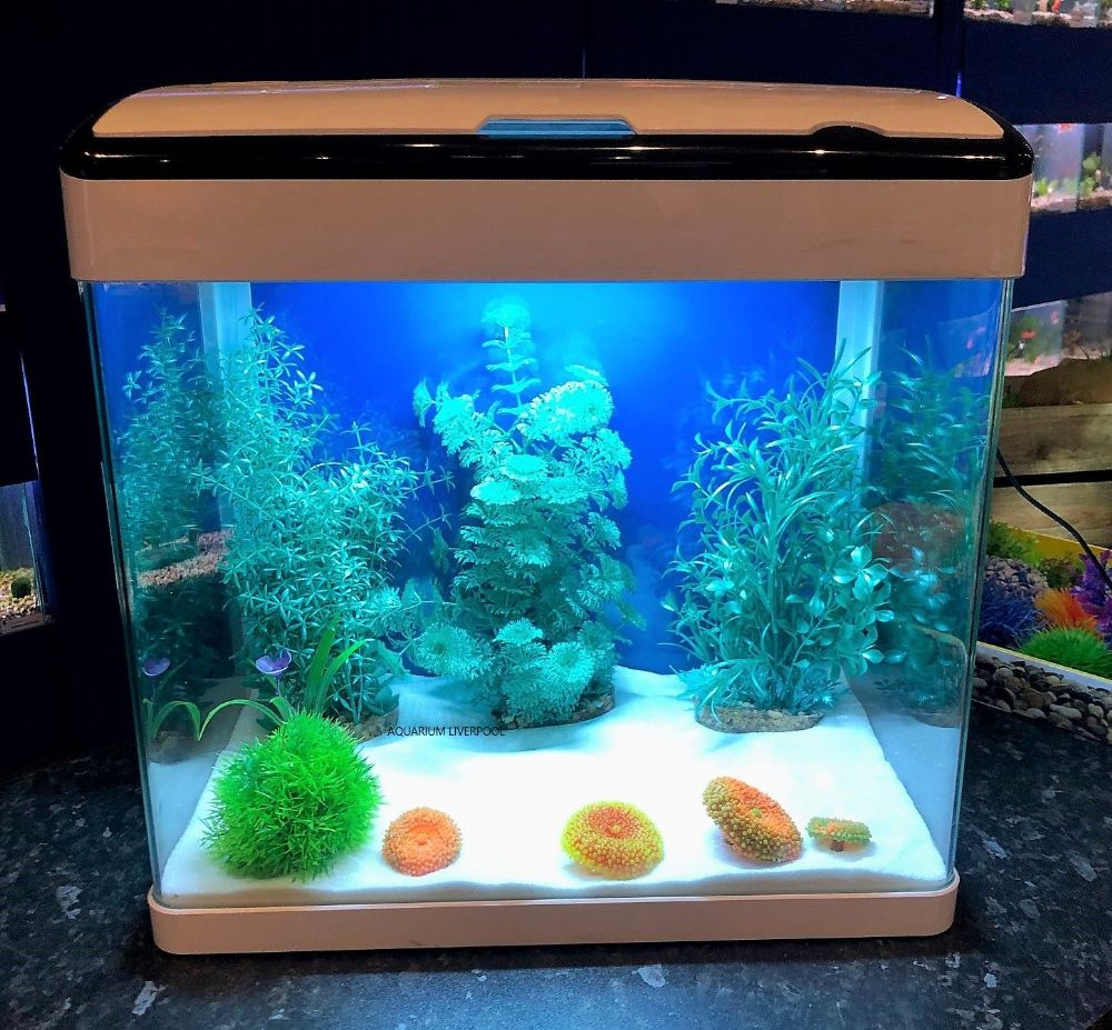 H7 WHITE  Glass Aquarium with Touch LED Lights & Trickle Filter